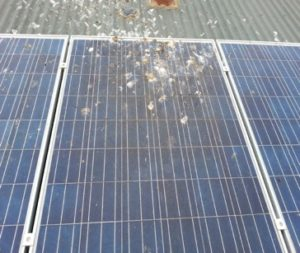 Bird droppings on solar panels