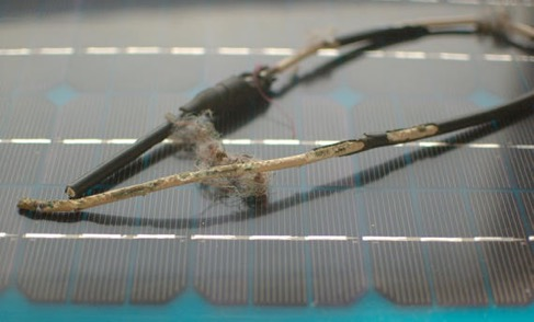 Squirrel chewed wires - GreenLeaf Solar